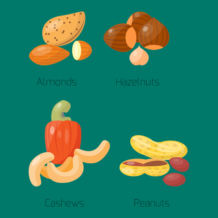 Piles of different nuts hazelnut almond peanut walnut cedar nut and brazil tasty cashew seed vector illustration. Organic collection nutshell group assortment vegetarian nutrition.