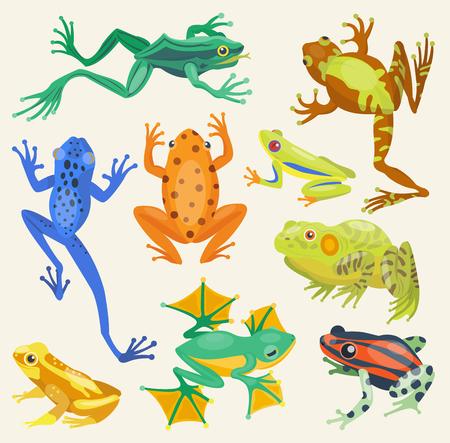 개구리 만화 열 대 동물 및 녹색 개구리 만화 자연 아이콘입니다. 재미 있은 개구리 만화 컬렉션 벡터 일러스트 레이 션. 녹색, 나무, 빨간색 독성 개구