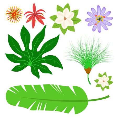 Tropical leaves summer jungle green palm leaf exotic design hawaii monstera botanical flora vector illustration. Decorative beach brazil tree foliage.