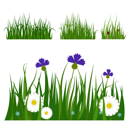Green grass border plant lawn nature meadow ecology summer gardening vector illustration