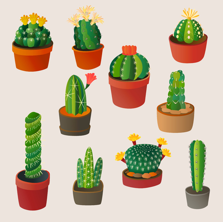 Cute cartoon cactus home plant nature vector illustration mexican summer