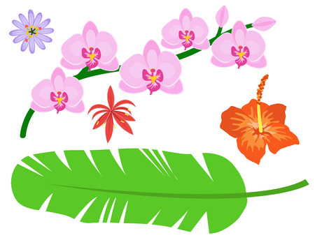 Beautiful tropical flower set design summer plants colorful decoration nature design floral drawing leaf blossom vector illustration.