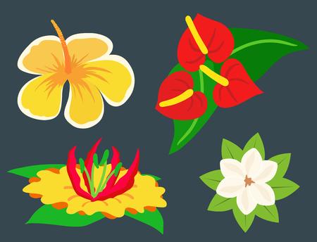 Beautiful tropical flower set design summer plants colorful decoration nature design floral drawing leaf blossom vector illustration.