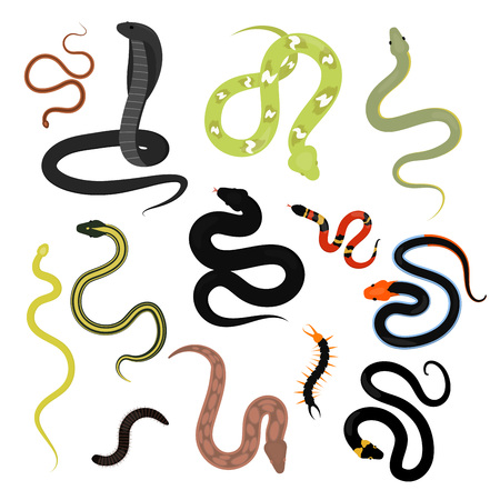 Different snake reptile animals cartoon vector set.