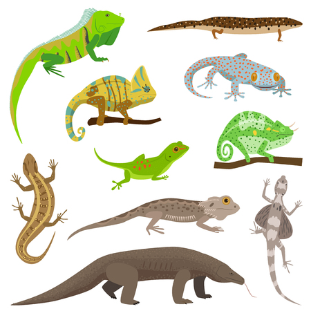 triceratops: Different lizard reptile animals isolated on white vector illustration.