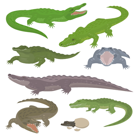 Green crocodile and alligator reptile wild animals vector illustration.