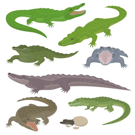 Green crocodile and alligator reptile wild animals vector illustration.