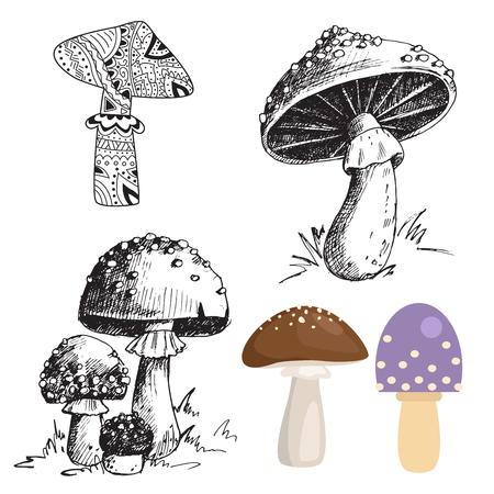 fly agaric: Amanita fly agaric toadstool mushrooms fungus different art style design vector illustration red hat