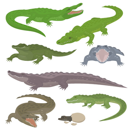 Green crocodile and alligator reptile wild animals vector illustration collection cartoon style Çizim