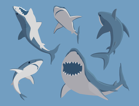 Vector illustration toothy swimming angry shark animal