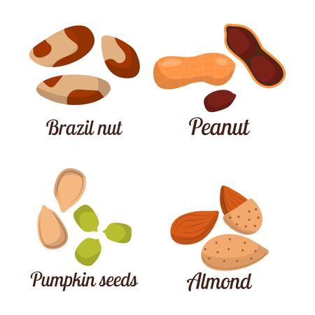 異なるナッツ ピスタチオ ピーナッツくるみと風味がよい種のベクトル図の山。有機コレクション言えばグループの品揃えの菜食主義者の栄養。