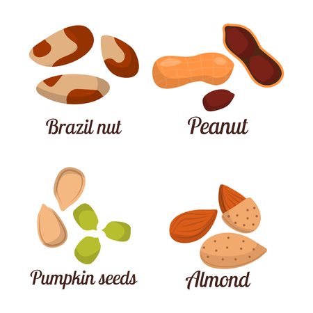 Piles of different nuts pistachio peanut walnut and tasty seed vector illustration. Organic collection nutshell group assortment vegetarian nutrition.