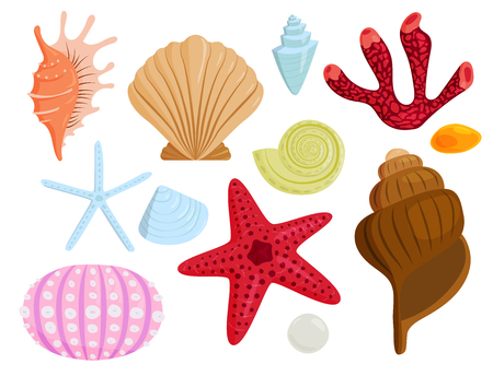 Sea shells cartoon  vector illustration