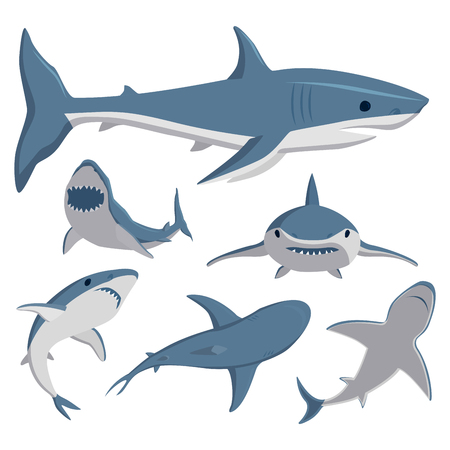 Vector illustration toothy swimming angry shark