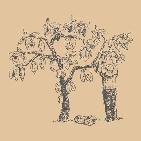 Cacaoyer vectoriel avec homme caractère fermier croquis dessinés à la main doodle alimentaire illustration sucrée au chocolat. Vecteurs