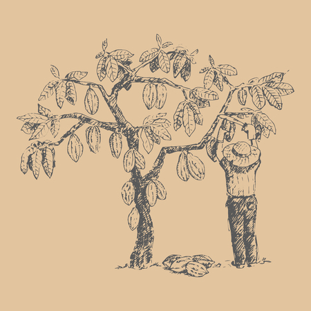 Vector cocoa tree with man character farmer hand drawn sketch doodle food chocolate sweet illustration. 矢量图像