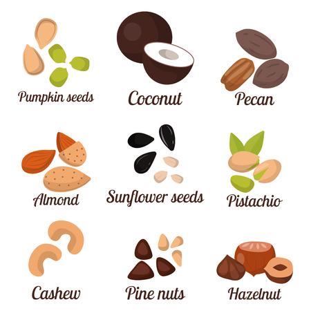 Piles of different nuts pistachio peanut walnut tasty seed vegetarian nutrition vector illustration