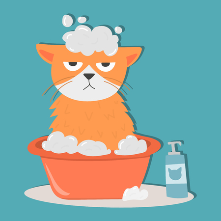 Portrait cat animal bathe pet cute kitten purebred feline kitty domestic fur adorable mammal character vector illustration.