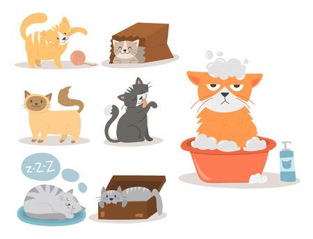 Van het het huisdieren de leuke katje van het portretkat dier rasechte van het het bont binnenlandse zoogdier katachtige karakter van het het kattenkarakter vectorillustratie. Stock Illustratie