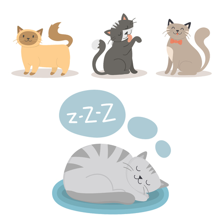 Des Tierkuscheltier-Charaktervektors der Porträtkatzentierschlafhaustier-netten Kätzchen reinrassigen katzenartigen Miezekatze inländischen Pelzes entzückende säugetier.