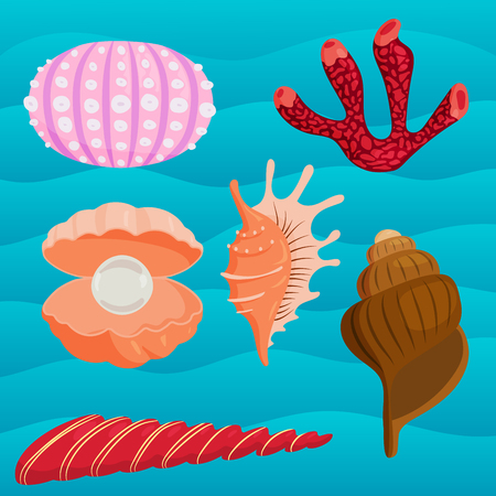 Sea shells marine cartoon clam-shell and ocean starfish coralline vector illustration