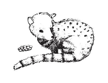 Kopi Luwak Civet 벡터 커피 콩 창조주 아시아 팜 동물 발리 인도네시아 손으로 만든 스케치 스타일 일러스트