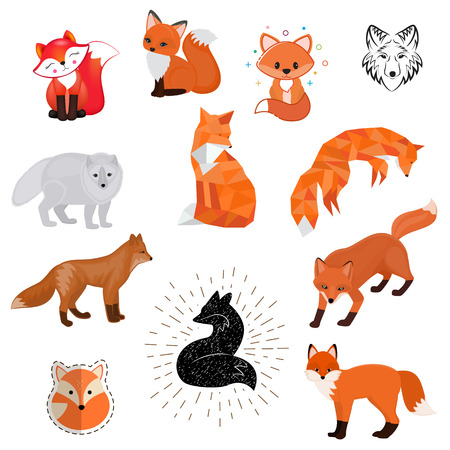 Fox vector cartoon cute illustration of animal wild logo, flat, sketch design wildlife foxy baby isolated wild animal on white background