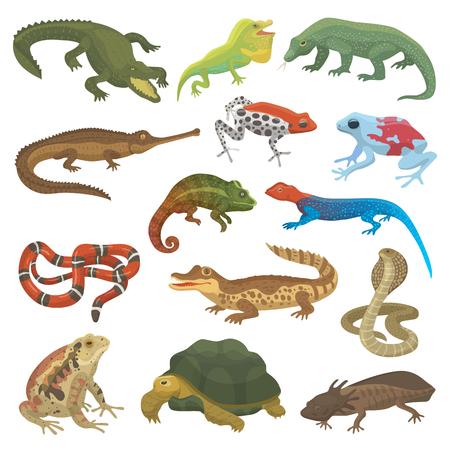 벡터 파충류 자연 도마뱀 동물 야생 동물 야생 카멜레온, 뱀, 거북이, 악어 흰색 배경에 고립 파충류의 그림 녹색 양서류