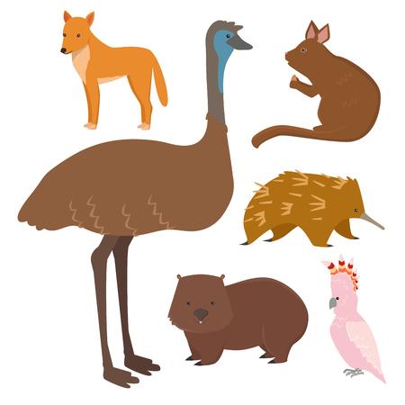 Australië wilde dieren cartoon populaire natuur karakters plat stijl zoogdier collectie vector illustratie.