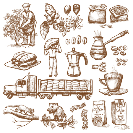 Coffee production vector plantation farmer picking coffeine beans on tree and vintage drawing drink retro cafe collection sketch coffeebean dessert illustration. Banco de Imagens