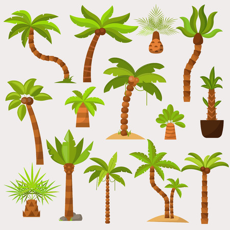 Palma vector palmaceous tropical tree with coconut or green exotic leafs and palmetto on tropic beach illustration palmy set isolated on white background