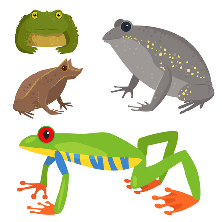 Frog vector cartoon tropical wildlife animal green froggy nature funny illustration toxic toad amphibian.
