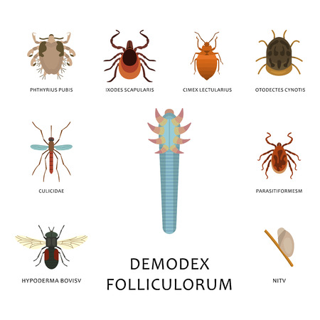 Menschliche Hautparasiten vector Wohnungsschädlingsinsektenkrankheits-parasitäre Wanzenmakrotierbiss gefährliche Infektionsmedizin-Schädlingsillustration.