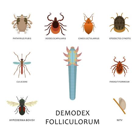 Vector de parásitos de la piel humana que alberga plagas insectos enfermedad parásito error macro mordedura de animal infección peligrosa medicina plagas ilustración.