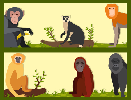 Monkey character animal different breads wild zoo ape chimpanzee vector illustration.