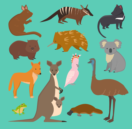 Australian wild vector animals cartoon collection. Australia popular animals like platypus, koala, kangaroo, ostrich set isolated on background.
