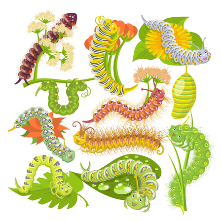Caterpillar vector illustration set isolated on white background