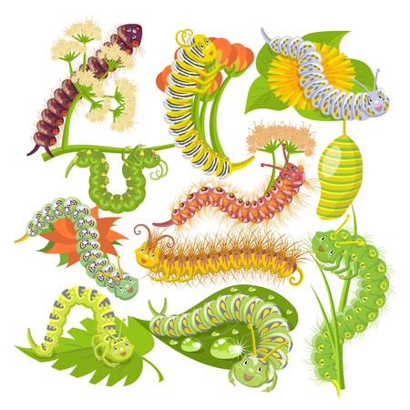 Caterpillar vector illustration set isolated on white background