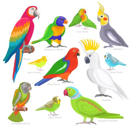 Parrot vector illustration set isolated on white background