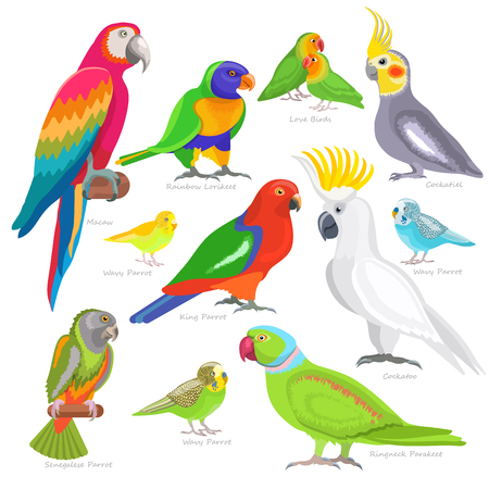 Parrot vector illustration set isolated on white background