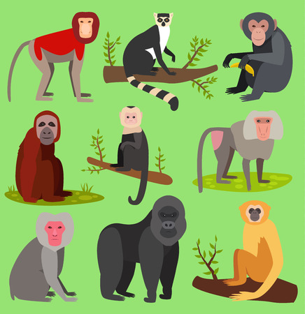 Vector monkeys apes breed rare animal set of cartoon macaque nature primate monkey chimpanzee and orangutan primate monkeys apes characters. Wild zoo jungle animals isolated Illustration