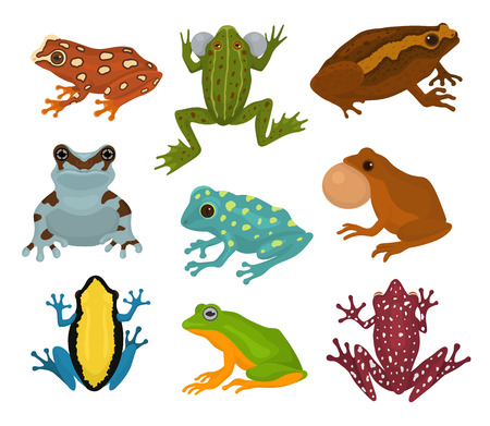 Frog vector froggy character and cartoon amphibian toad in tropical nature illustration set of fauna exotic treefrog and bullfrog isolated on white background