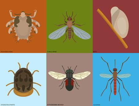 ヒト皮膚寄生虫ベクターハウジング害虫昆虫病寄生虫虫病マクロ動物咬傷危険感染症薬害虫イラスト。