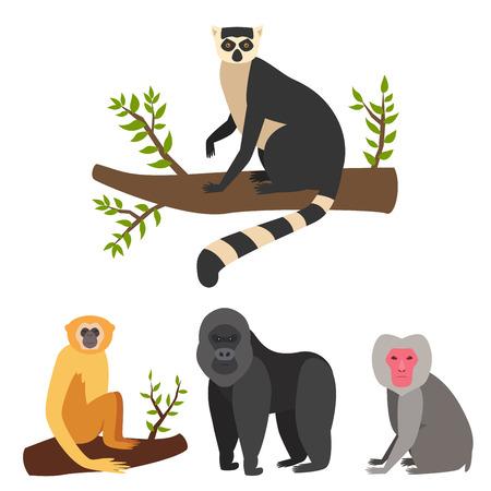 Verschillende aap broden afbeelding illustratie Stockfoto - 98363252