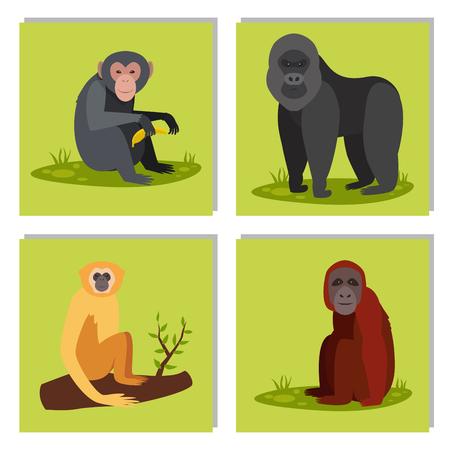 猿のキャラクター動物異なるパン野生の動物園猿チンパンジーベクターイラスト。  イラスト・ベクター素材