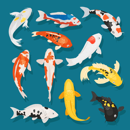 Japanese fish vector illustration carp and colorful oriental koi in Asia set of Chinese goldfish and traditional fishery isolated background