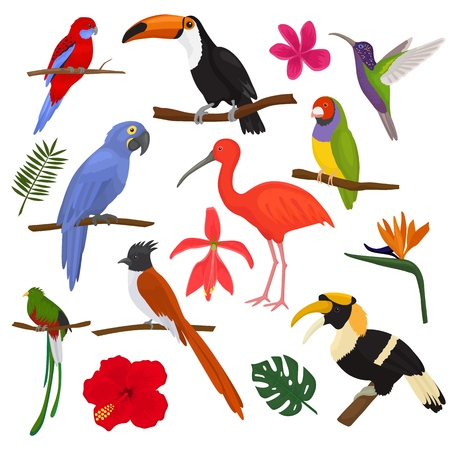 Tropical birds vector exotic parrot toucan and hummingbird with palm leaves illustration set of fashion birdie ibis or hornbill in flowering tropics isolated on white background