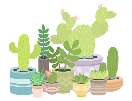 Cactus green plant cactaceous home nature cacti vector illustration of tree with flower. Cute cartoon cactus nature cactaceous vector illustration.