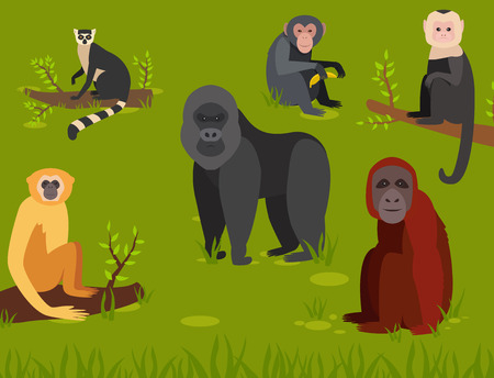 Monkey character animal different breads wild zoo ape chimpanzee illustration.