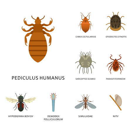 Human skin parasites vector housing pests insects disease parasitic bug macro animal bite dangerous infection medicine pest illustration.